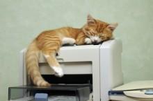 猫 暑さ 対策