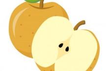 梨 種類 ランキング